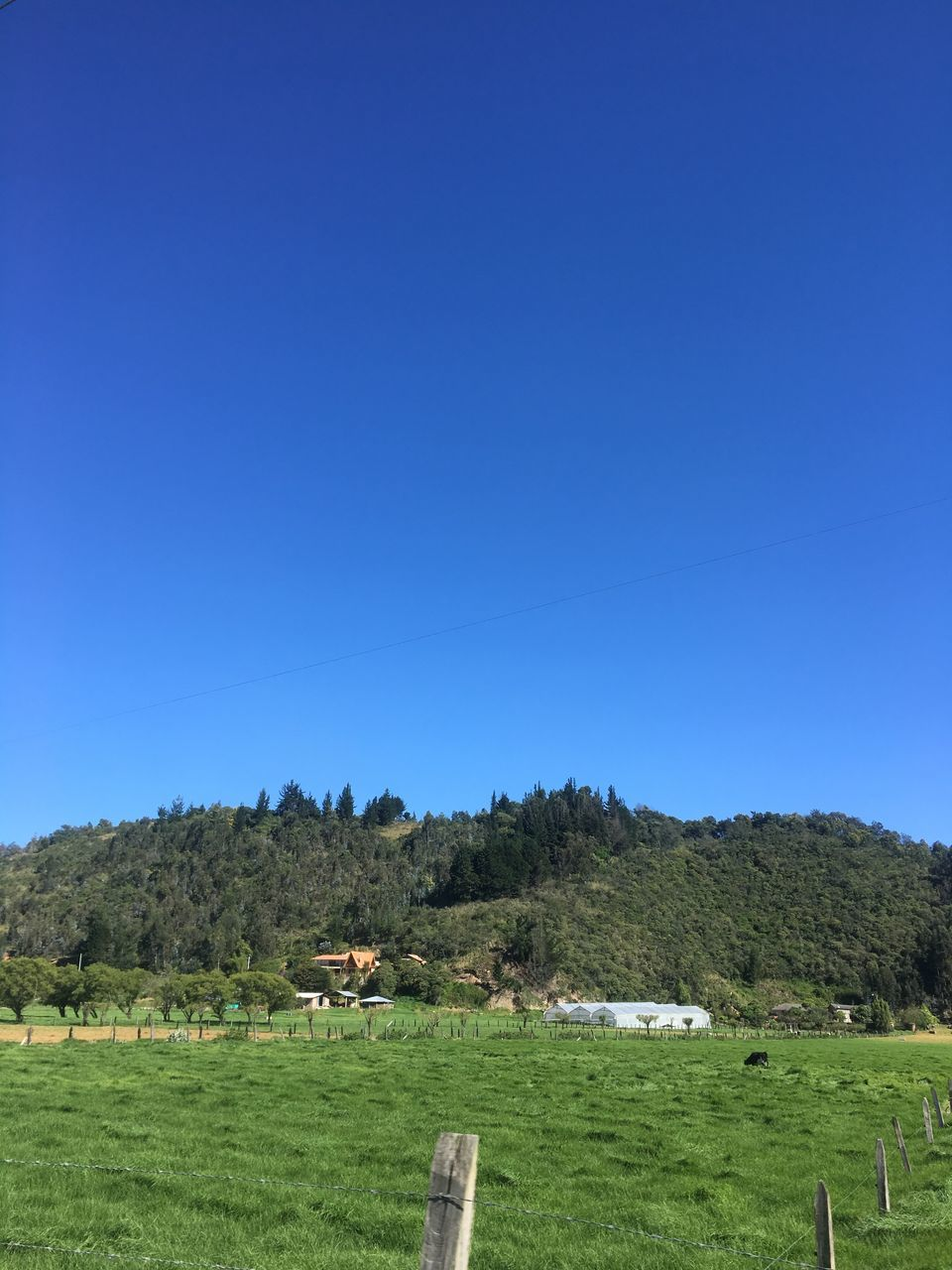 blue, copy space, clear sky, field, nature, landscape, no people, tranquility, tree, tranquil scene, grass, beauty in nature, scenics, outdoors, day, sky, hay bale