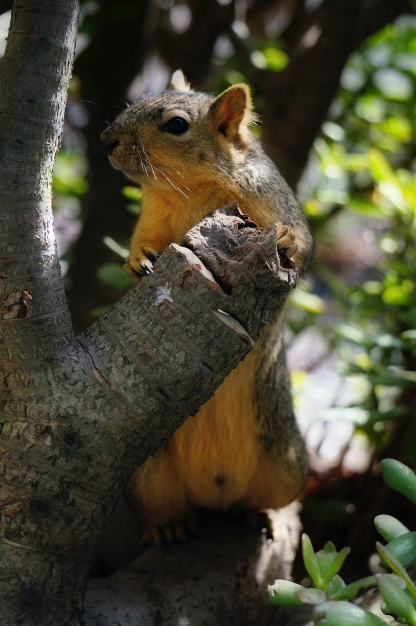 Close-Up Of A Squirrel On Branch