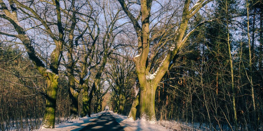 Going down the forest road. ]][[ Icy road conditions. Bare Tree Beauty In Nature Branches Cold Temperature Downhill Forest Nature No People Outdoors Road Scenics Shadows Snow Tranquil Scene Tranquility Travel Tree Winter