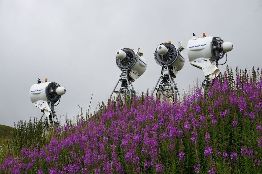 Snow guns waiting for their moment Activity Beauty In Nature Camera - Photographic Equipment Day Field Flower Flowering Plant Freshness Growth Land Land Vehicle Lavender Mode Of Transportation Nature No People Outdoors Photography Themes Plant Purple Technology