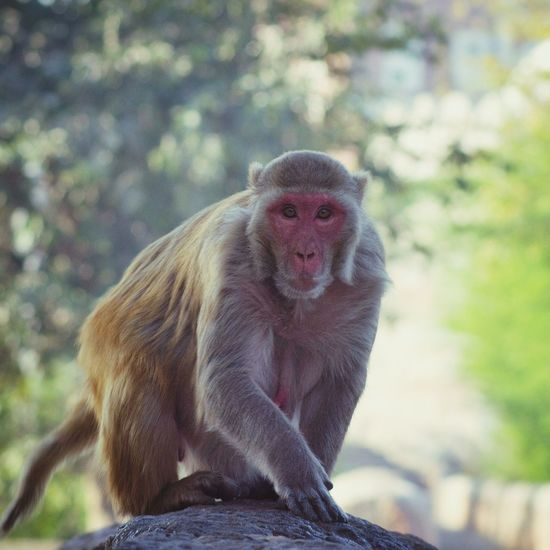 Animal Themes Monkey Mammal No People Primate Full Length One Animal Care Outdoors Day Nature Animals In The City Delhi Diaries Delhi India Animal Photography Wildlife Photography Wildlife & Nature EyeEmNewHere Animal Wildlife Eye4photography  EyeEm Best Shots