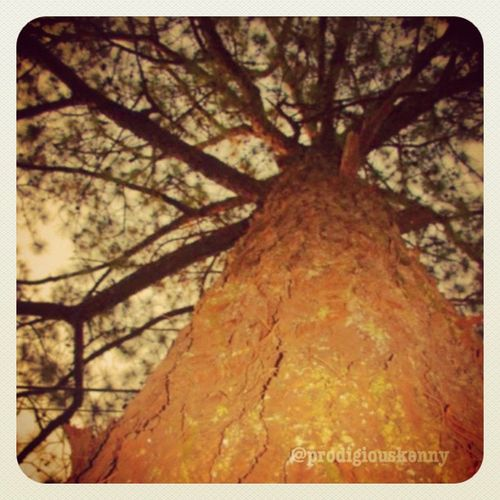 Coty of Pines. Thechallengigers Igersmanila I_promote Photooftheday bestoftheday jj gmy jj_forum iphoneography iphonesia gang_fam iphoneonly 9pmhabit instagramhub statigram captionactions instagood igersawards instalike