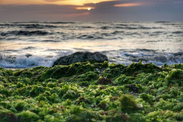 Sea nature Sea