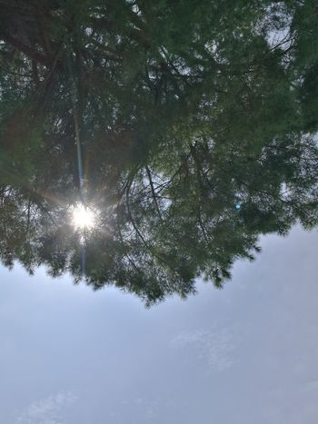Tree Low Angle View Reflection Nature Sky No People Day Outdoors Water Beauty In Nature Branch