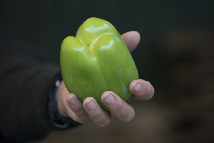 Close-up of hand holding bell peppers