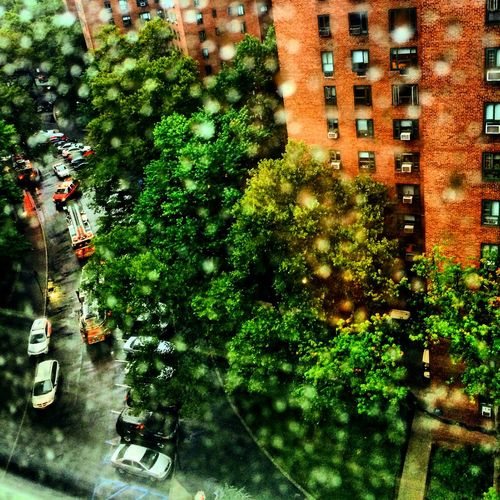 Rainy Day Buildings Cars Day Exterior Green Lush Foliage No People Outdoors Rain Tree Urban