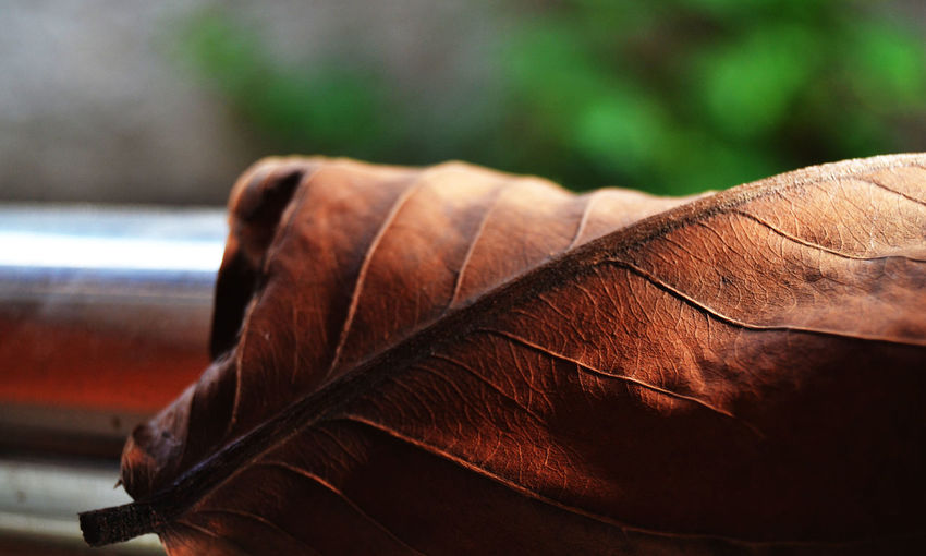 dry leaves in the afternoon Brown Close-up Focus On Foreground No People Plant Part Leaf Day Nature One Animal Leather Animal Themes Animal Outdoors Fragility Wood - Material Selective Focus Vulnerability  Natural Pattern Dry Feather