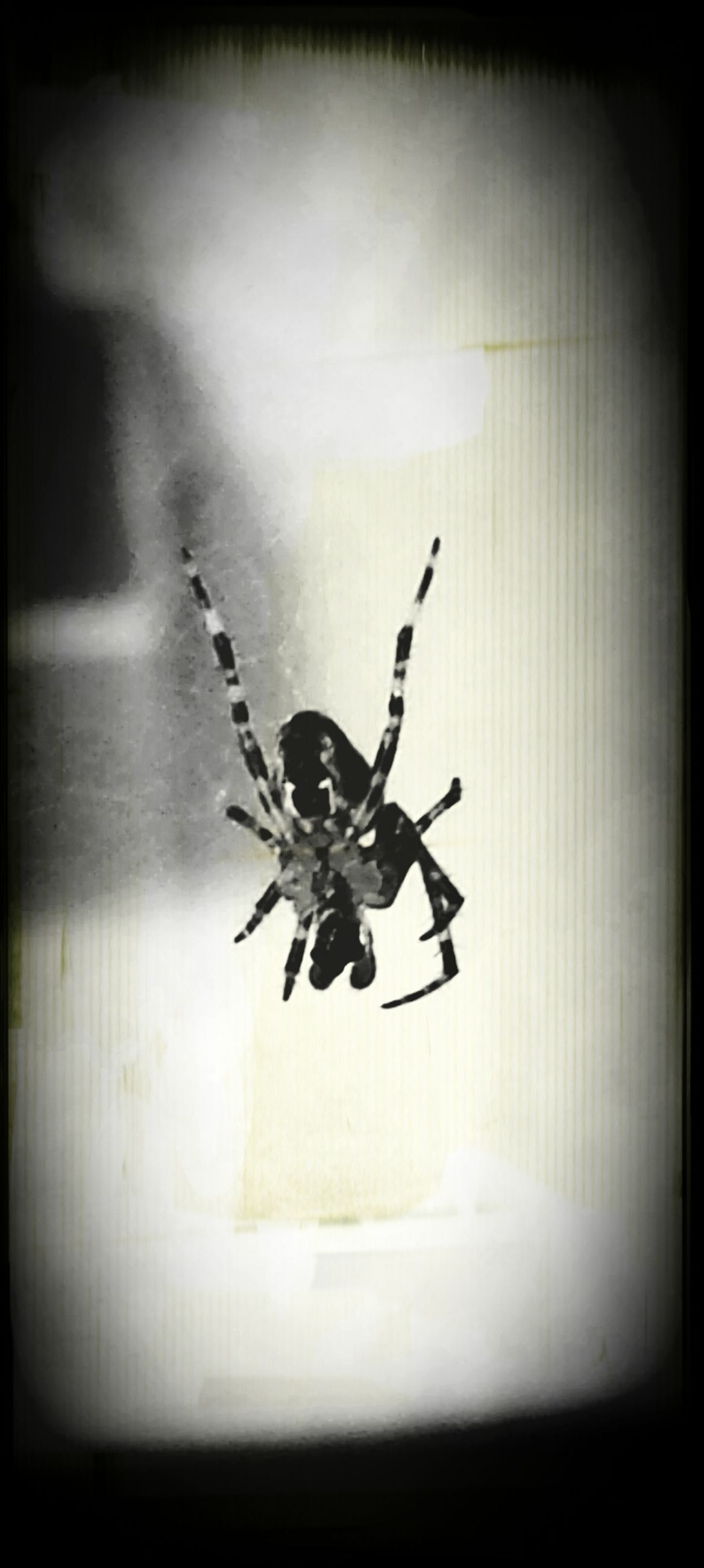 indoors, insect, animal themes, one animal, spider, auto post production filter, wildlife, transfer print, animals in the wild, window, glass - material, wall - building feature, selective focus, close-up, vignette, full length, no people, spider web, glass, wall