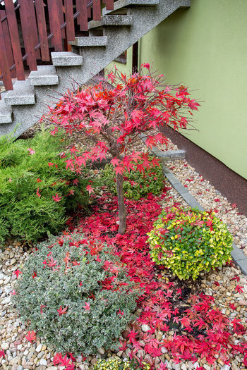 High angle view of red flowering plant by wall