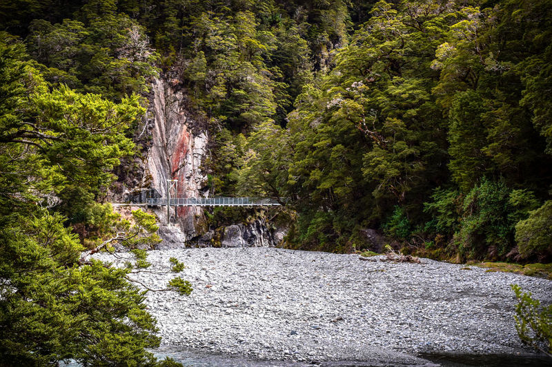 Walking into the Blue Pools in New Zealand. Cairns Beauty In Nature Bridge Day Flowing Flowing Water Foliage Forest Green Color Growth Land Lush Foliage Nature No People Non-urban Scene Ornamental Garden Outdoors Rock Tower Scenics - Nature Tranquil Scene Tranquility Tree Water Zen Zen-like