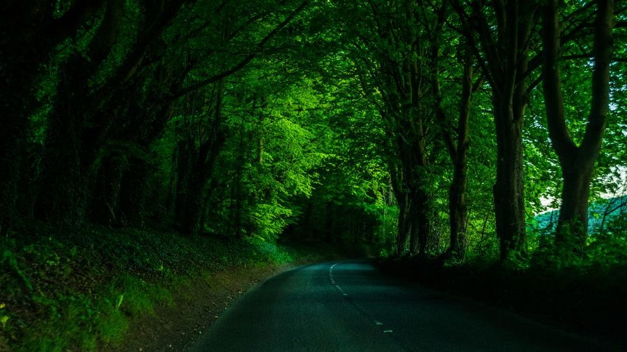 The best roads are through nature A nice tarmac road guarded by life giving trees. Beauty In Nature Direction Empty Road Forest Green Color Growth Land Nature No People Outdoors Road The Way Forward Tranquil Scene Tranquility Transportation Tree Tree Trunk WoodLand