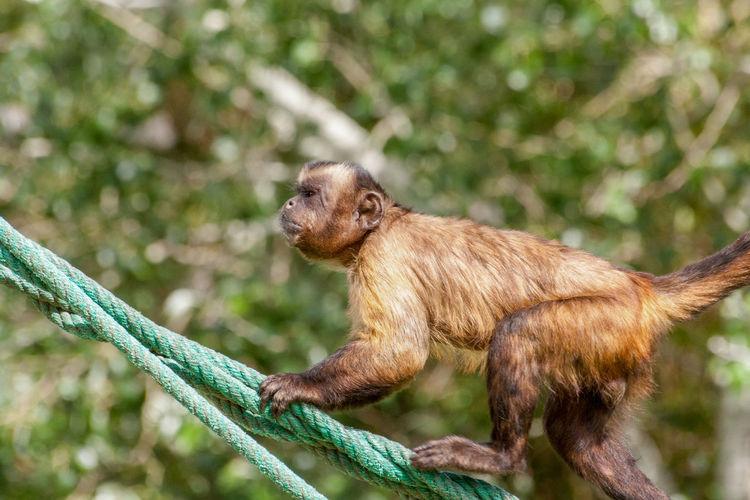 Monkey sitting on a tree