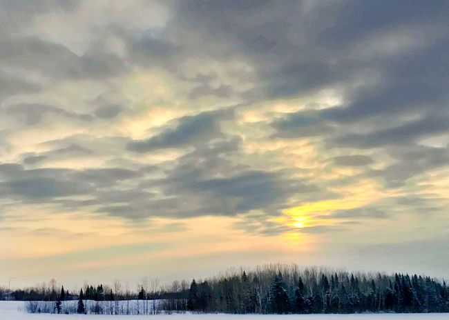 Sunrise over trees and snowy field. Snow Covered Landscape Tree Line Horizontal Sunrise Beauty In Nature Winter Sky Tranquil Scene Scenics Cold Temperature Nature Tree Weather Cloud - Sky Snow Bare Tree Landscape