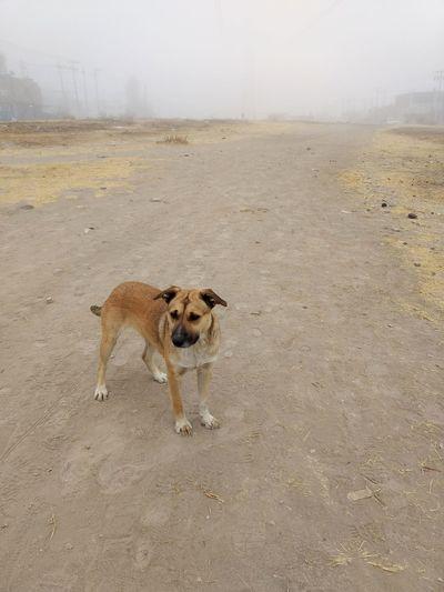 Dog against sky
