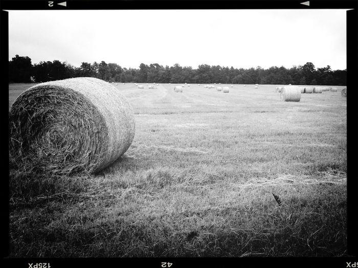 The Farm Work Shots