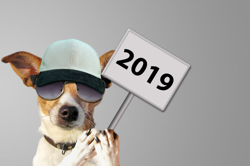 New year 2019 Pets Dog Animal Text Hat Portrait Communication New Year Funny Fun 2019 Number Data Business Success Sign Motivation Idea Concept Healthy Eating Future Happy Vacations Time