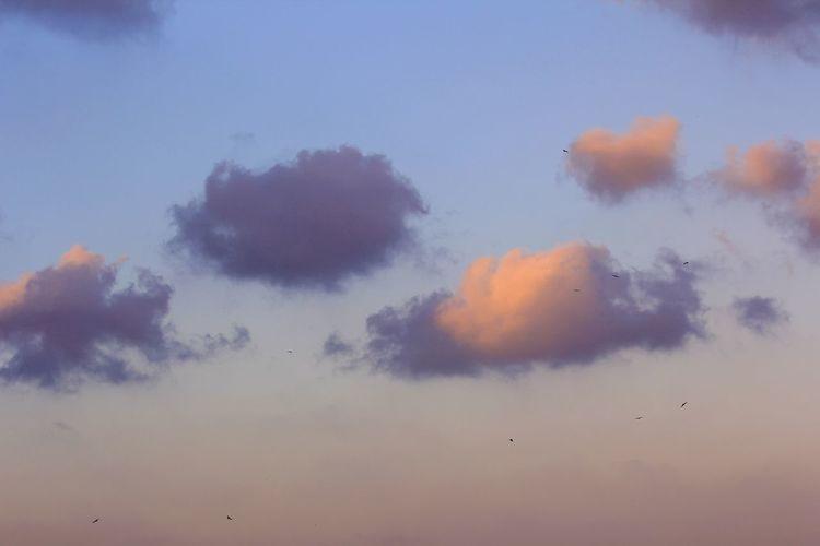 sky love Sky