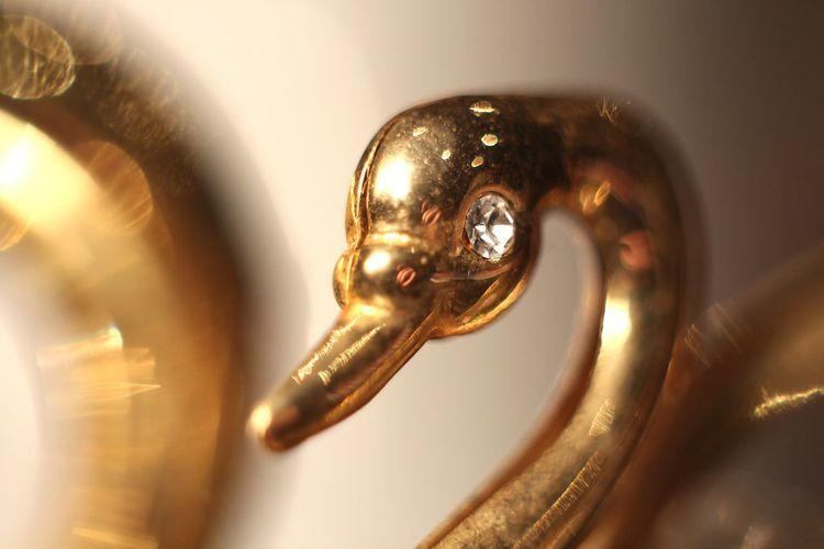 Macro Macro Photography Swan Gold Macro Ring Helios 44-2 58mm F2
