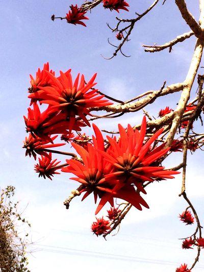 Nature Rare Tree Beauty Lebanon Byblos First Eyeem Photoo