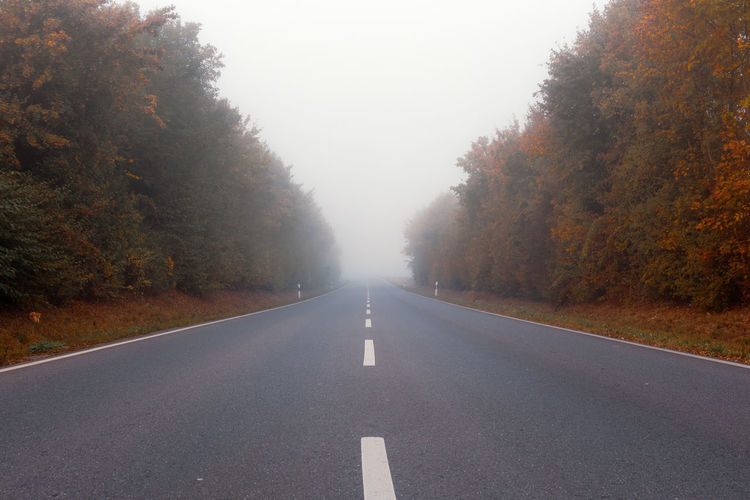 empty road along trees during autumn Autumn Change Danger Dangerous Day Diminishing Perspective Direction Dividing Line Fog Long Marking Nature No People Outdoors Plant Road Road Marking Sky Symbol The Way Forward Tranquility Transportation Tree Treelined vanishing point