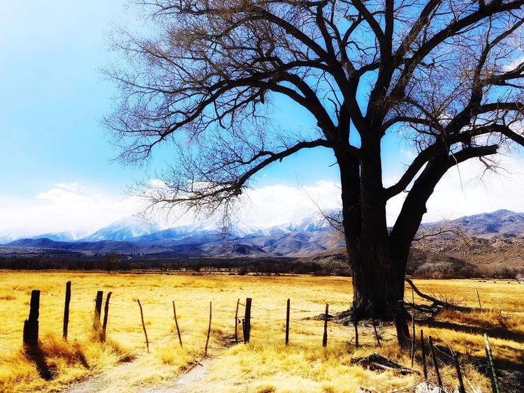 Road trip Tree Bare Tree Landscape Nature Tranquility Beauty In Nature Tree Trunk Dead Tree Outdoors Tranquil Scene No People Day Mountain Sky Branch Scenics