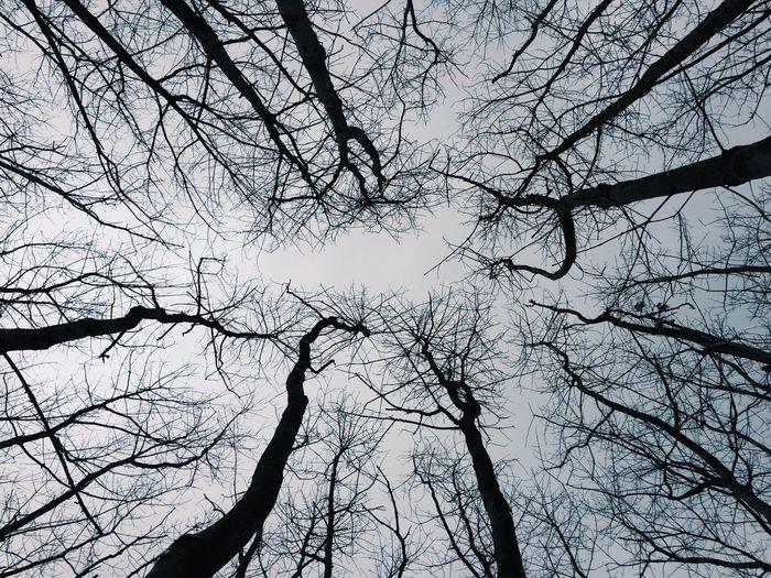 Mood Wood The Great Outdoors - 2016 EyeEm Awards