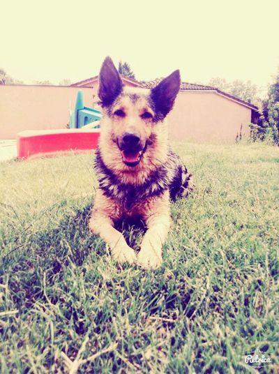 In my dog. It's beutiful ❤️