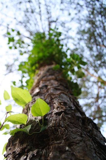 Wild art Tree