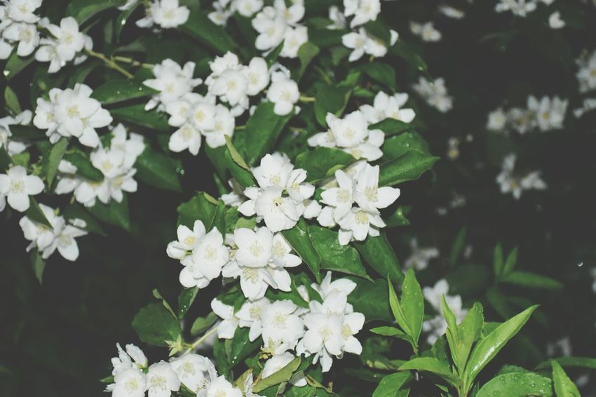 Nighttime White Color Flowers,Plants & Garden