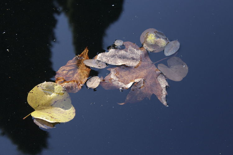 Beauty In Nature Contraste Contrastes Naturales Floating On Water Leaf Nature No People Water