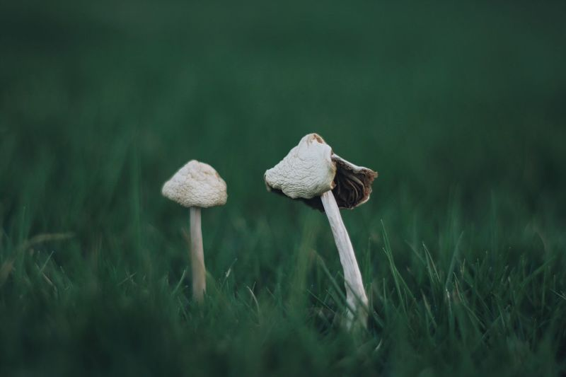 Mushroom Still Life Nature Photography Nature_collection Grass Nature Growth Fungus Toadstool Field Beauty In Nature No People Green Color Outdoors Day Close-up Fly Agaric Fragility After Rain The Week On EyeEm EyeEmNewHere