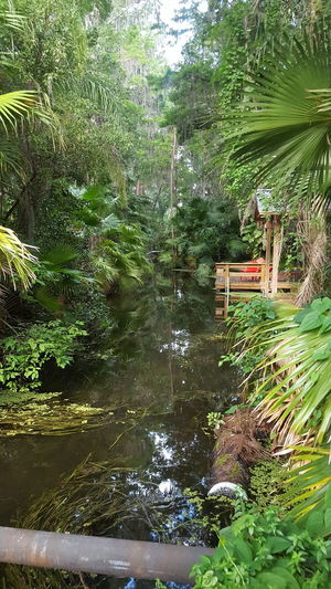 A jungle and a half. Jungle Humid Tropical Sweaty Palm Trees I Get Off When It Gets Hot Like It Or Not Amuzing Be Happy