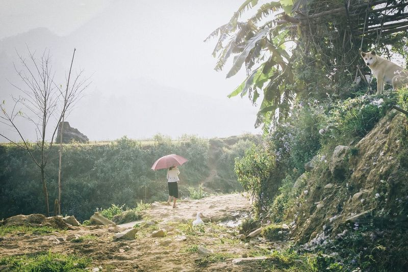 Sapa, Vietnam Womanwithumbrella Doglife Walking Alone... Eyem Nature Lovers
