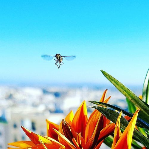 Insect Flying Air Vehicle Nature No People Day Outdoors first eyeem photo AI Now