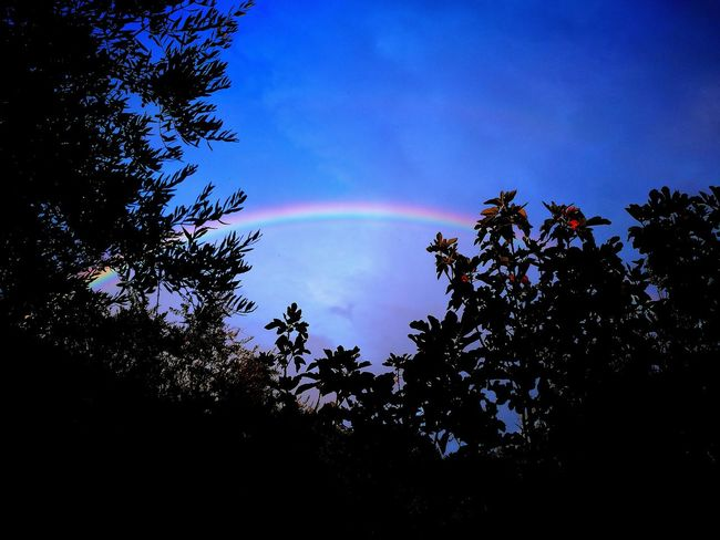 Rainbow 🌈😍 Tree Tranquil Scene Tranquility Raimbow Raimbowbloom Outline Nature Rome Day Panoramic Myphoto Full Frame Hanging Out Green Color Lamp Taking Photos Hello World Nofilter Likeforlike Followme Enjoying Life Italia Photography Home Art