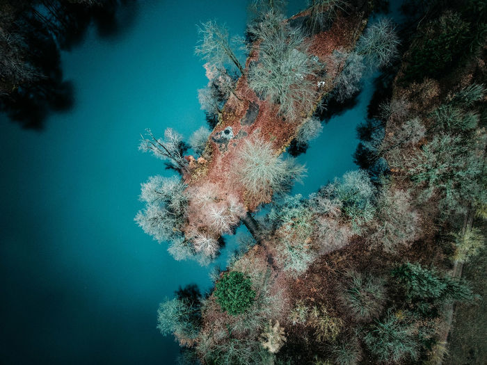 Underwater Sea UnderSea Sea Life Animals In The Wild Animal Wildlife Water Animal Marine Animal Themes Coral Reef Nature Invertebrate Fish Swimming Vertebrate One Animal No People Ecosystem  Pollution Drone  Dronephotography Drone Photography Droneshot Aerial View Aerial Aerial Photography Aerial Landscape