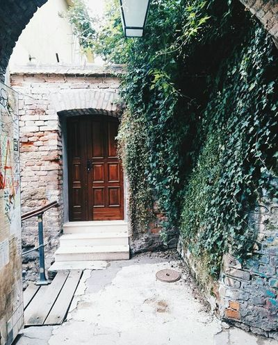 Miles Away Built Structure Building Exterior Architecture Window No People Tree House Plant Outdoors Day Ivy Crotia Travel Traveling Photography Aesthetic EyeEmNewHere Aesthetically Pleasing Plant
