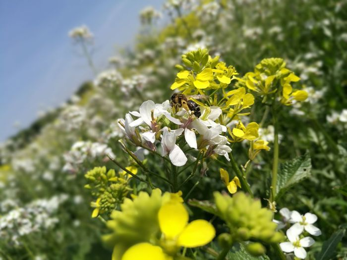 Flower Insect Nature Yellow Plant Beauty In Nature Animals In The Wild One Animal Animal Wildlife Pollination Flower Head Fragility No People