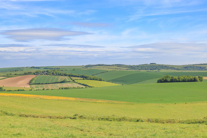 Sussex Landscape Agriculture Beauty In Nature Cloud - Sky Day Field Green Color Landscape Nature No People Outdoors Patchwork Landscape Rural Scene Scenics Sky South Downs Summer Sussex Tranquil Scene Tranquility
