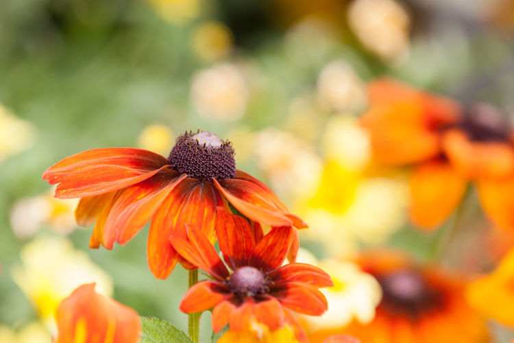 Beauty In Nature Blooming Close-up Flower Flower Head Flowerheads Flowers Fragility Freshness Growth Nature Orange Color Petal Plant Spring Summer The Week On EyeEm