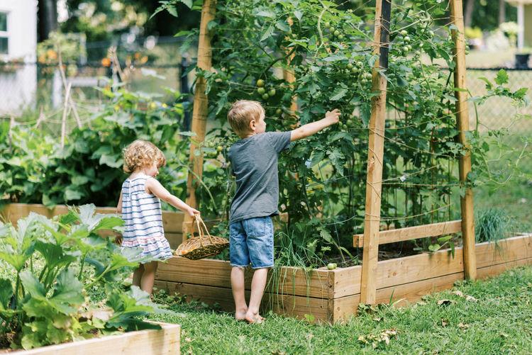 Rear view of friends standing by plants in basket