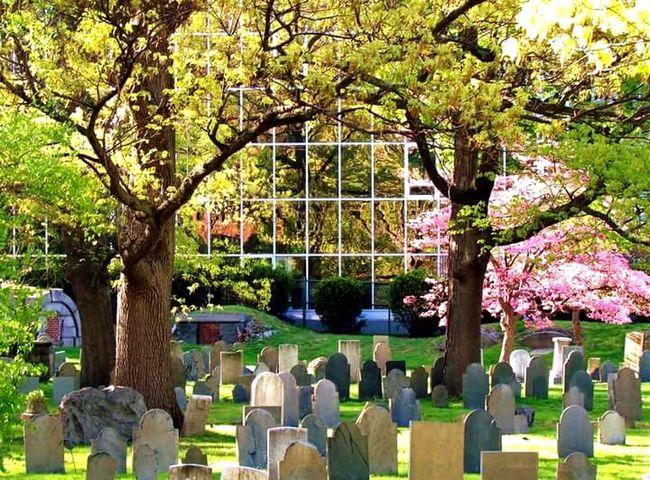 Outdoors No People Day Tree Sunlight NatureQuincy City Hall grave Graveyard Gravestone Graves Graveyardbeauty Graveyard Trees
