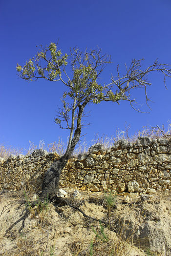 Arid Climate Nature Old Rough Solitude Stone Wall Tree