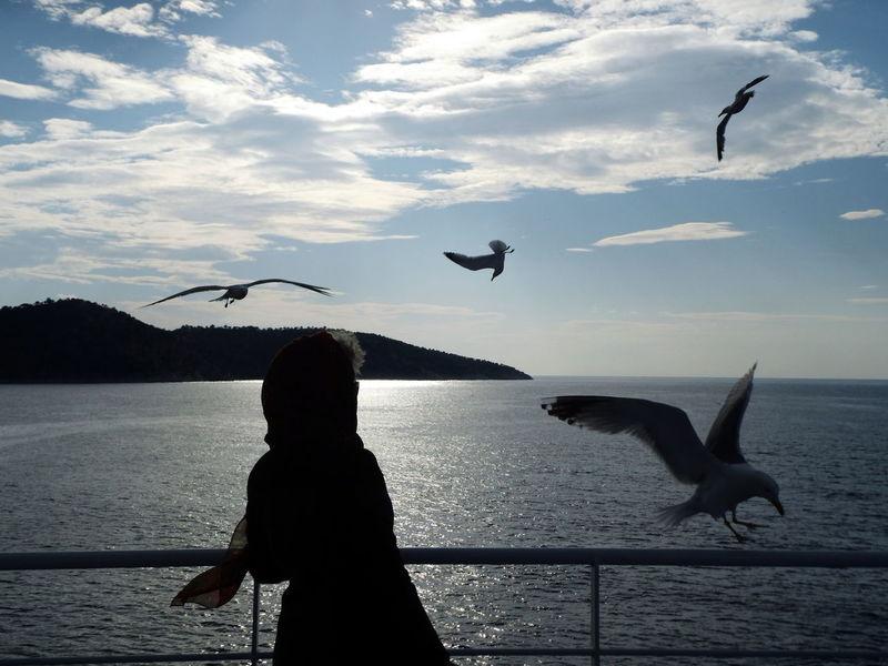 Adapted To The City Fresh On Eyeem  Gulls Gulls In Flight Sunrise Sunrise Silhouettes Calm Seas Sea Talking To The Gulls