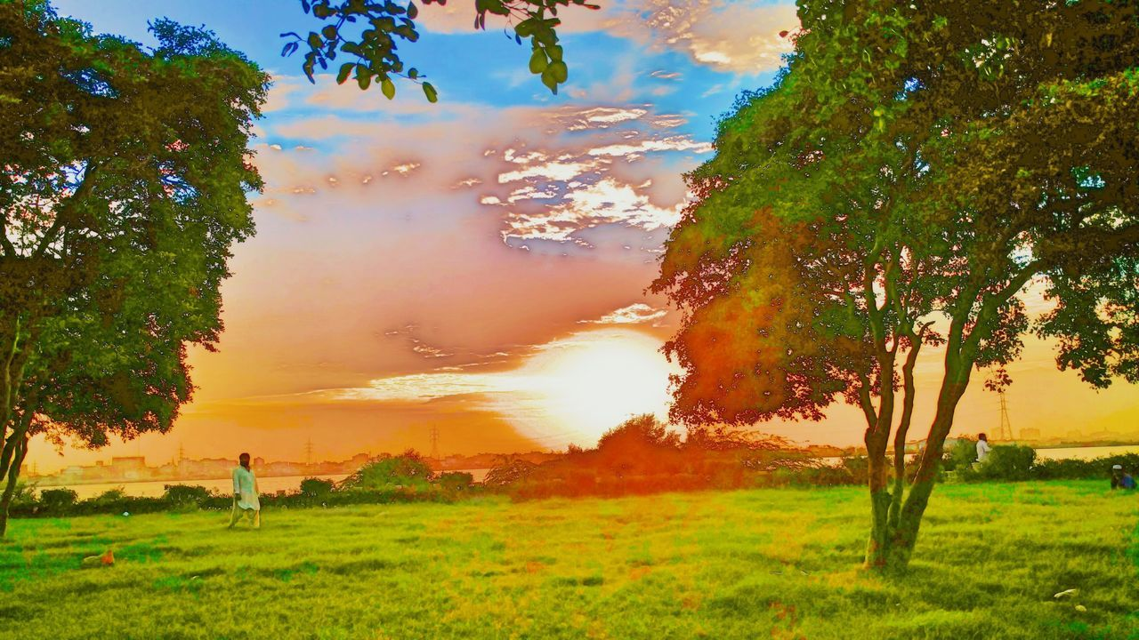 tree, nature, beauty in nature, grass, outdoors, scenics, green color, tranquil scene, tranquility, no people, field, landscape, water, day, growth, sunset, branch, sky, mammal