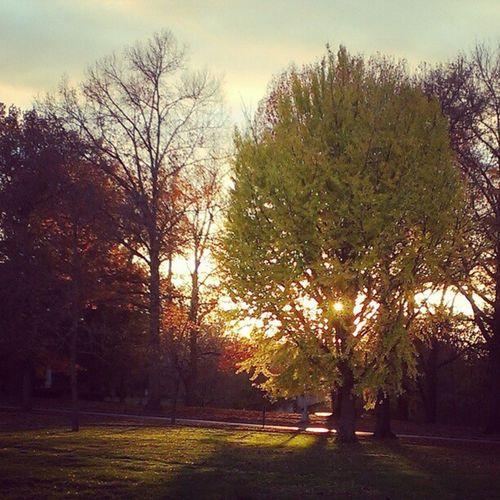 Tree and sun Fall Sunlight Thewoods Smwc Allmyphotosareoftrees Sunset Tree Autumn