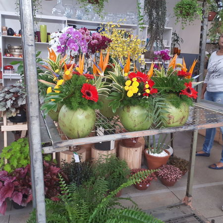 Greenhouse Flower Multi Colored Store Variation Retail  Choice Arrangement Flower Head Small Business