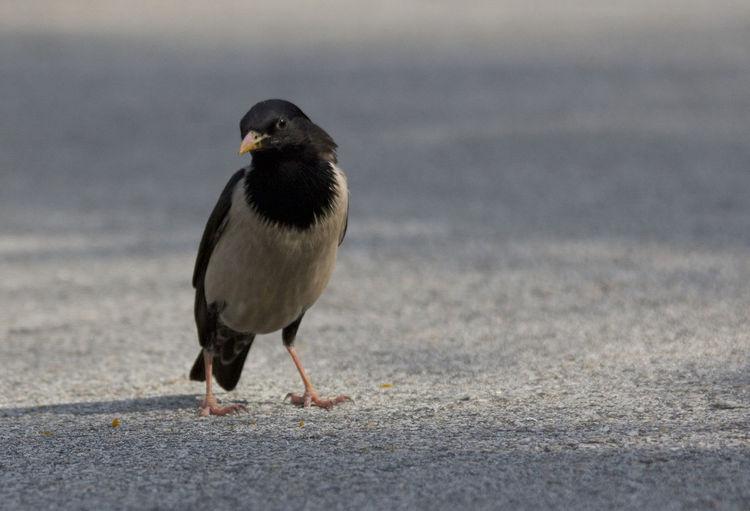 Close-up of bird on street