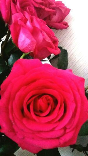 Rose 🌹🌹🍃