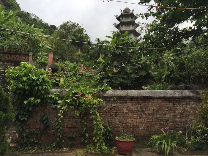Vietnam Buddhist Temple Temple Nature Plants Wall